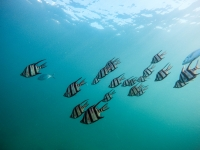 Orologi Seiko automatici subacquei per chi ama le profondità del mare